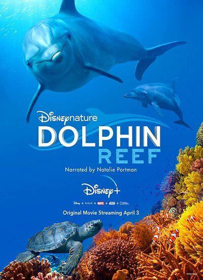 دانلود مستند صخره دلفین دوبله فارسی Dolphin Reef 2020