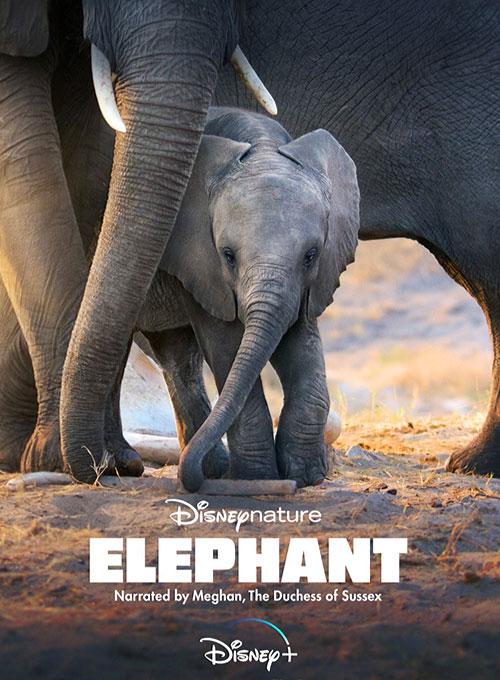 دانلود مستند فیل Elephant 2020 با دوبله فارسی