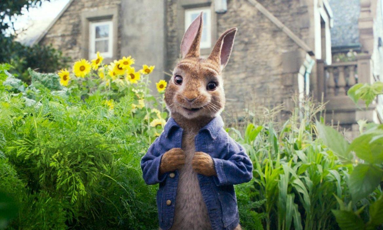 پیتر خرگوش